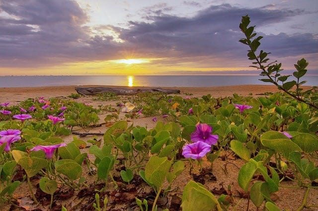 Is beach sand good for gardening? are there any plants that will grow in sand?
