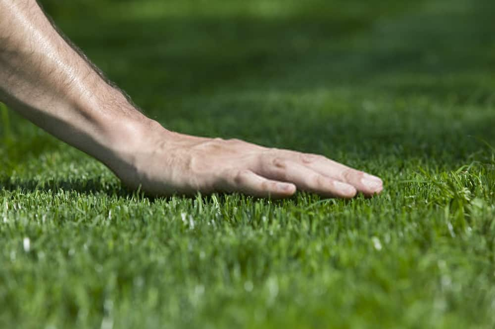 How to make bermuda grass thicker fuller and better guide!