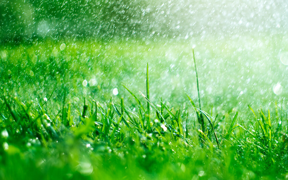 Getting st.augustine grass to grow quickly can be quite hard if you don't know what you're doing. Click here to find out how to make st augustine grass spread quickly.