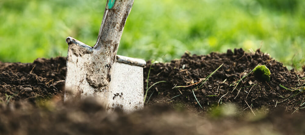 How to use a trenching shovel is a question most first time gardeners ask. Find out here the proper way to do it